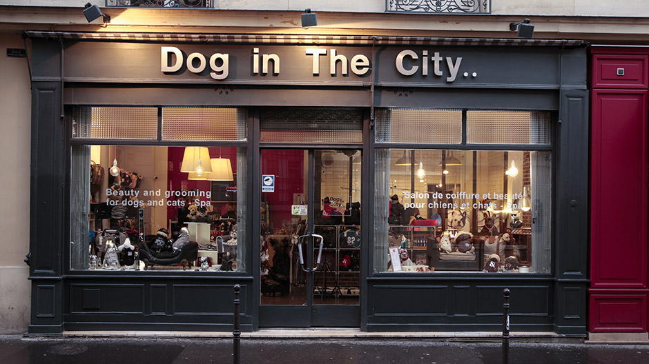 Un salon pour chien et chat paris dog in the city for Salon de the valenciennes